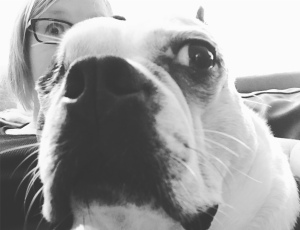 Black and white photo. In the background is a woman with white skin and light, shoulder-length hair, wearing glasses. In front of her is a Boston Terrier, his eye on the left is closed and his eye on the right is big and round. Both have a surprised look on their faces.