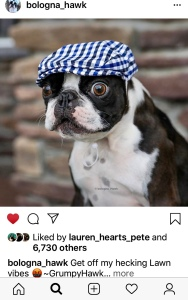 Green, grassy background. Black and white Boston Terrier dog stands on the grass. He is wearing a white, blue, and black plaid driver's cap. His eyes are very bugged out, as he stares at something in the distance.