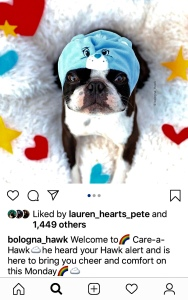 White, fluffy dog bed takes up whole background. Red felt hearts and gold felt stars decorate the bed. A black and white Boston Terrier lies in the bed. He wears a blue bonnet hat. The hat looks like a Care Bear face. The dog is looking up at the camera.
